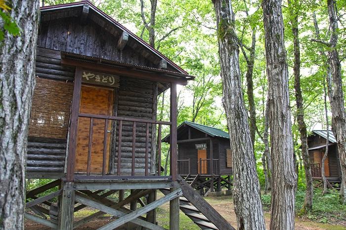 森林 公園 小国 越後長岡地域の宝ポータルサイト